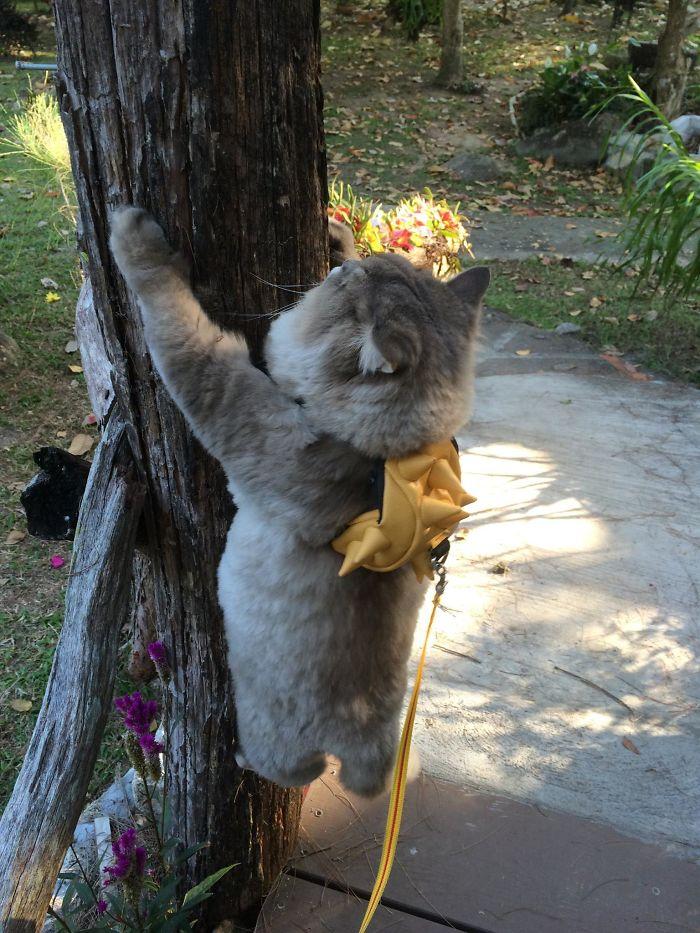 hug_cat04