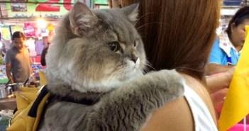 ハグ好きの猫