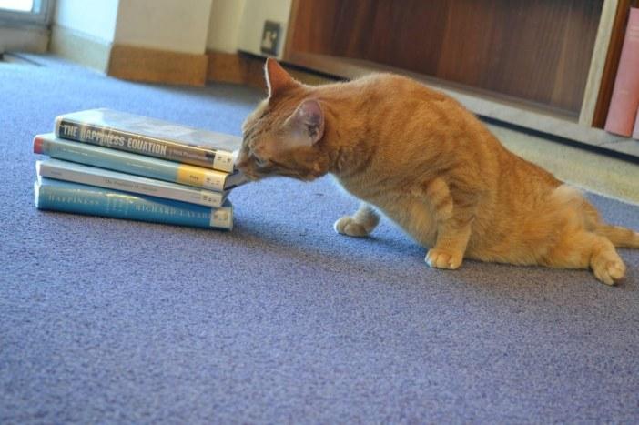 本に興味津々の猫