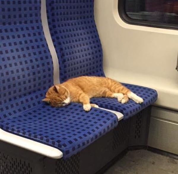 座席で眠る猫