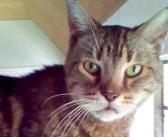 引き取り手が見つからず、12年間も保護施設で過ごした猫。ついに里親さんが現れると、とっても嬉しくて… (6枚)