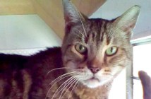 12歳の猫