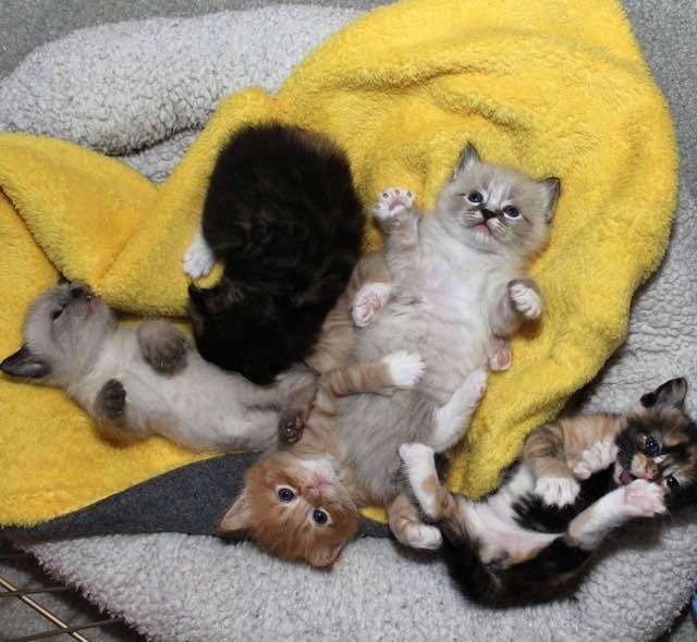 遊ぶ子猫達
