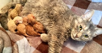 6匹の子猫と母猫