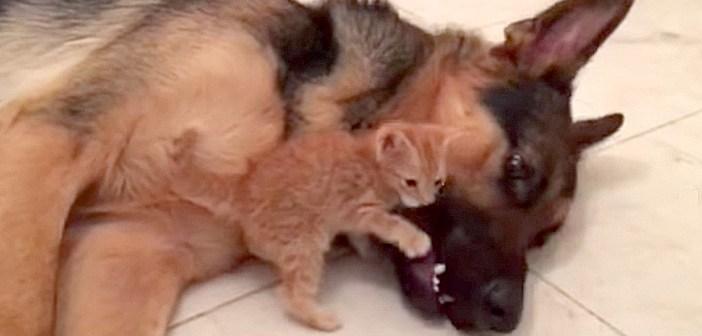 犬にギュッとする子猫