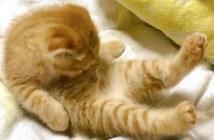 毛づくろいをする子猫