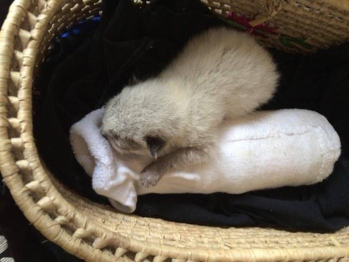 ボトルを抱きしめる子猫