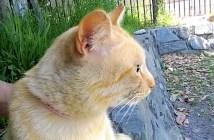 隣に来た猫