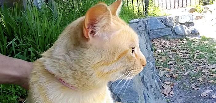 暑い日差しを避けるため、公園の木陰に座っていた男性。すると1匹の猫が現れて… 一緒に涼んでくれた (*´ω`*)♡