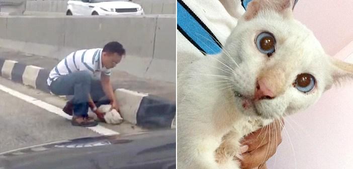 道路で猫を救う男性