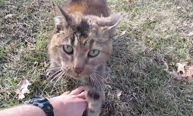 近づいて来た猫