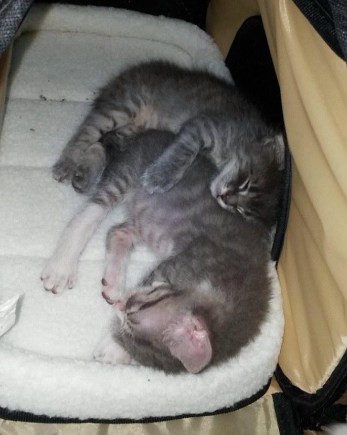 ぎゅっとする子猫