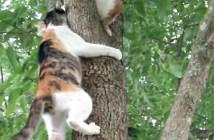 子猫を助けに行く母猫