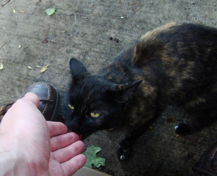 挨拶する猫