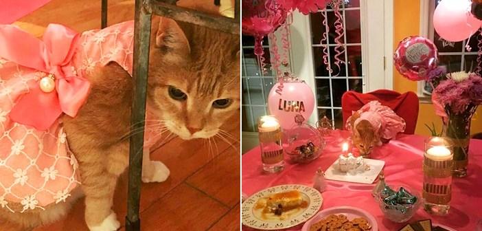お祝いされる猫