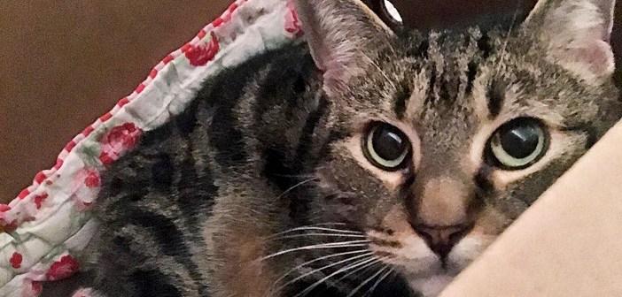 「非常に攻撃的」と言われ、ずっと人間を避けてきた猫。里親さんの優しい行動で、3週間後に大きな変化が! (10枚)