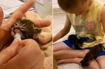 子猫を助けた少年