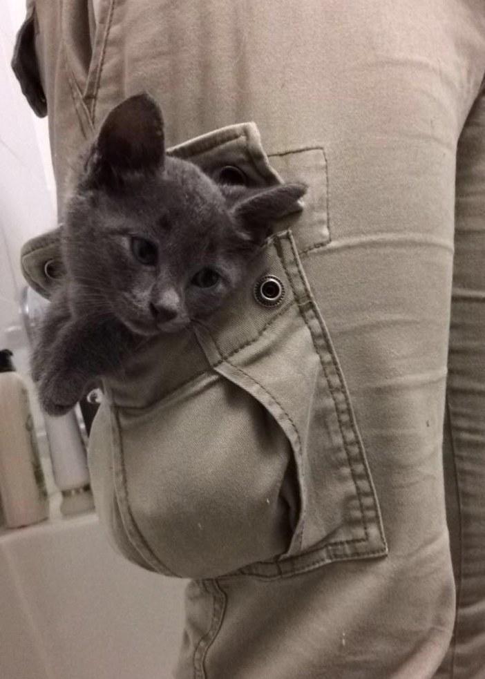 ポケット子猫