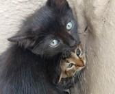 駐車場の片隅で身体を寄せ合いながら、お互いを守っていた子猫達。優しい男性に保護され、人の愛情を感じると… (7枚)