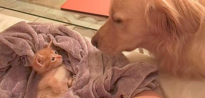 子猫と大きな犬