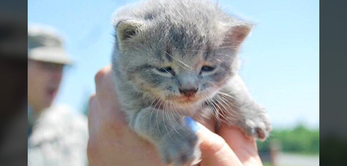 ヘリコプターから助け出された子猫