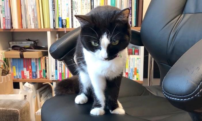 椅子を渡された猫