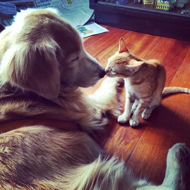 挨拶する犬と子猫