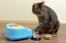 楽器を演奏する猫