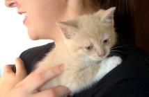 抱きしめられる子猫