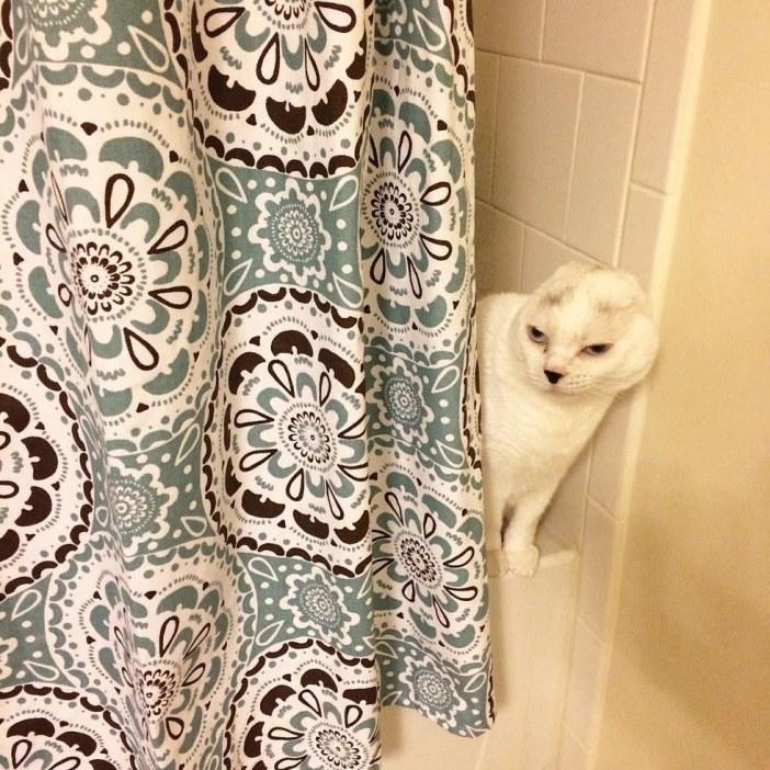 カーテン猫