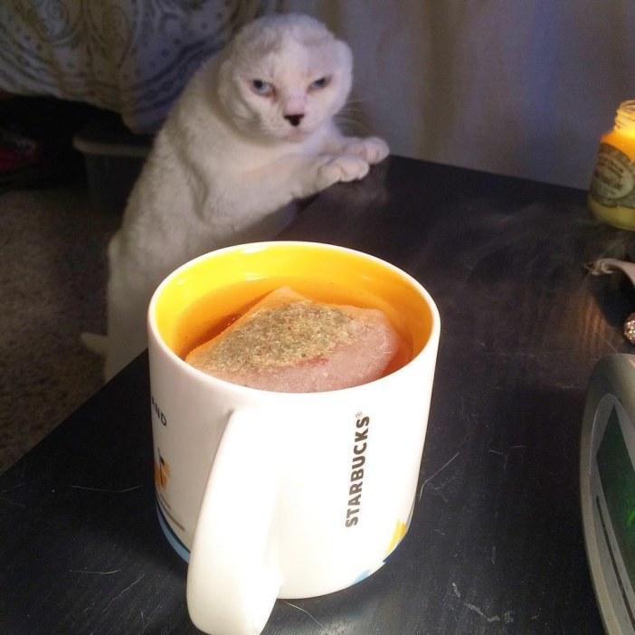 カップを見つめる猫
