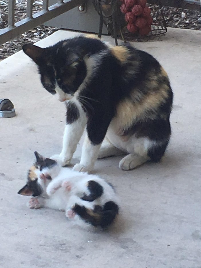 可愛い猫の親子