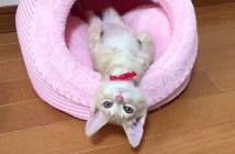 何かがしたい子猫