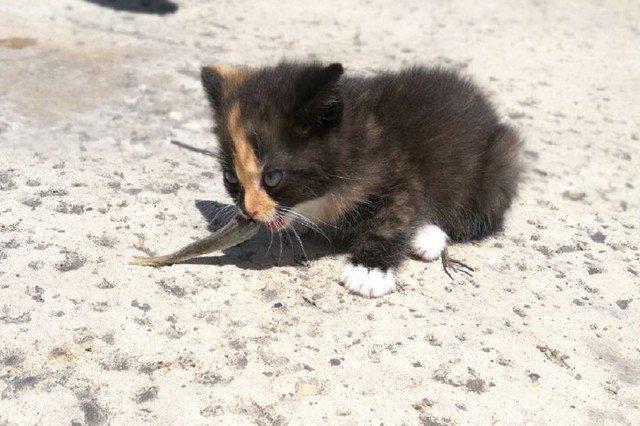 魚を食べる子猫