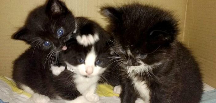 バスに乗っていた3匹の子猫を運転手さんが発見! 安全な場所に連れて行くと、とっても安心したようで… (6枚)