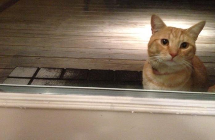 ドアから見つめてくる猫