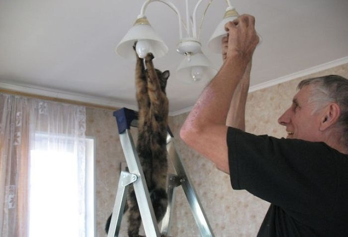 電球を取り替える猫