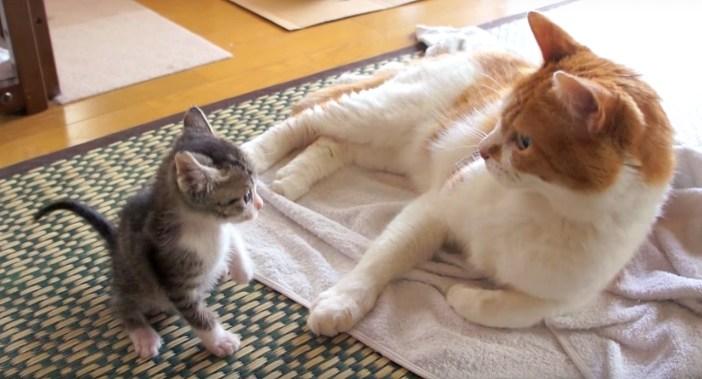 先住猫と出会った子猫