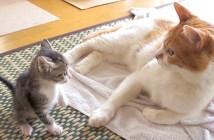 子猫と先住猫