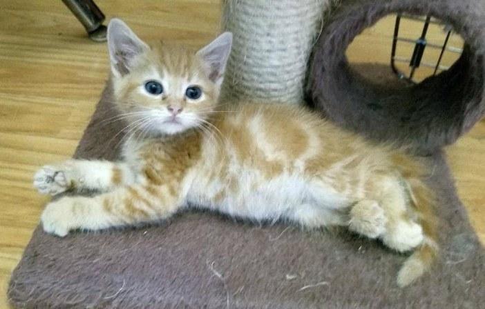 横になる子猫