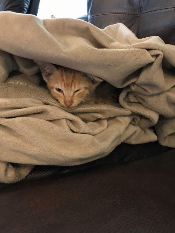 布団の中の子猫