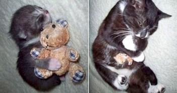 ぬいぐるみが大好きな猫