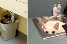 動物病院で隠れる猫