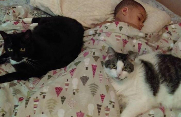 猫と一緒に眠る少年