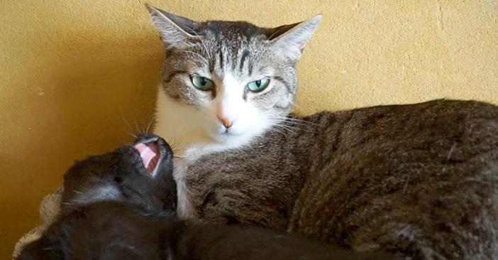 子猫に驚く猫