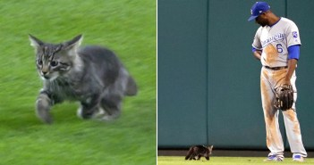 球場に来た猫