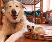 悲しい出来事に笑顔を無くしてしまった犬。再び笑顔を取り戻せたのは、4匹の幼い子猫達のおかげでした (8枚)