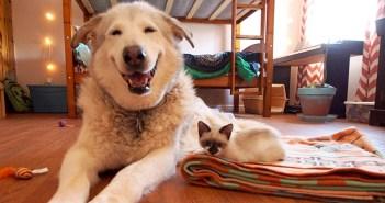 笑顔の犬と子猫