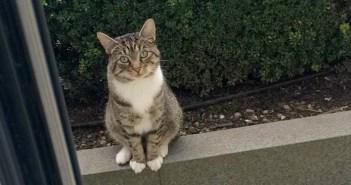 友達を待つ猫