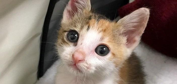 病気で保護された子猫